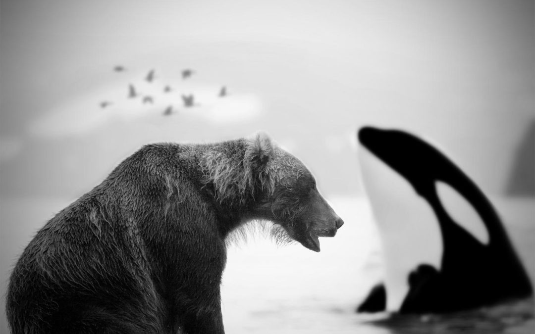 The Bear, The Goose and The Whale (Part 1)